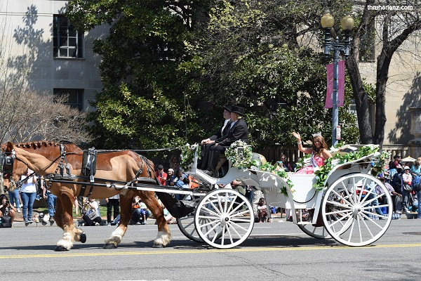 2018 Miss America on a white carriage with flowers going down the road in the 2018 National Cherry Blossom Parade