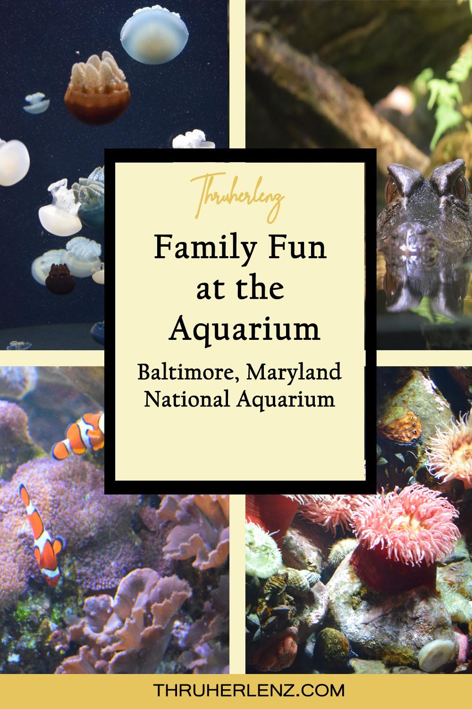 Family Fun at the Baltimore Aquarium