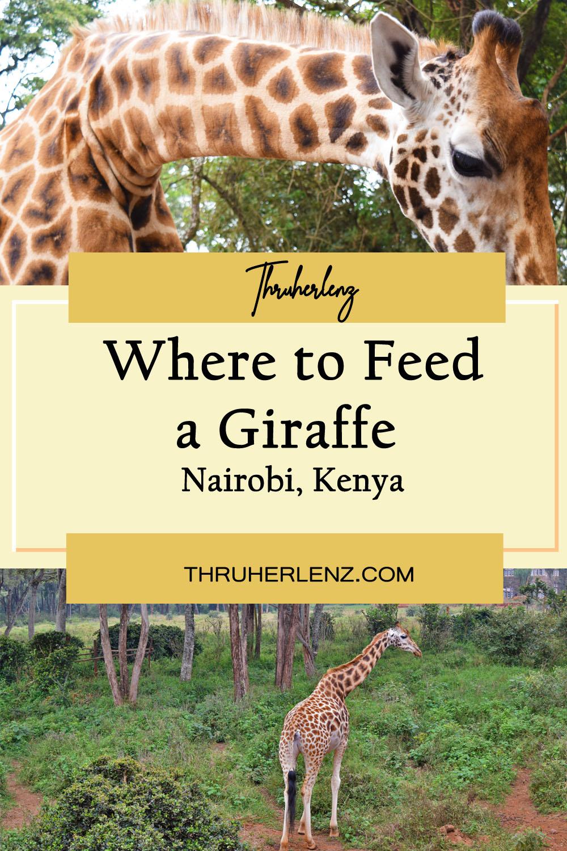 Where to Feed a Giraffe in Nairobi, Kenya