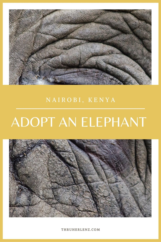 How to Adopt an Elephant From Nairobi, Kenya
