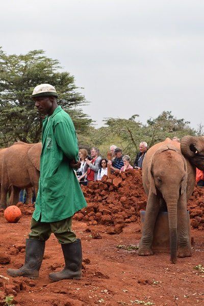 Man in green coat, crown and elephants around